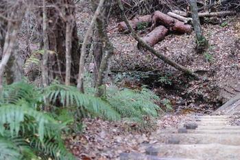 森林公園3.JPG